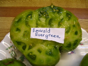 Emerald Evergreen