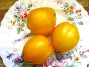 Plum Lemon