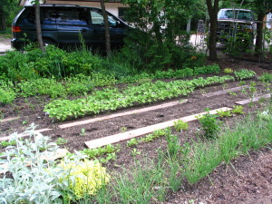 A mixed bed of veggies
