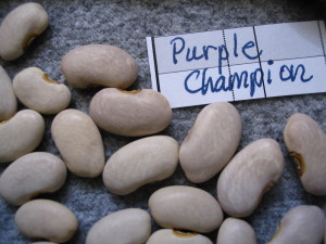 Purple Champion podded pole