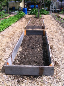 New beginnings of raised beds.