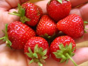Fruits of my labor...yum!