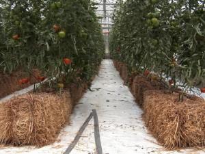 Straw Bale Garden Inside!