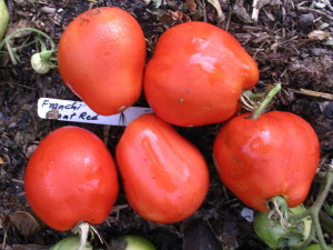 Franchi Giant Red