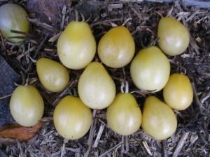Ivory Pear