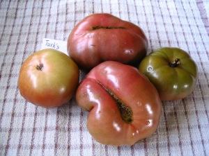 Tomato Turk's Muts