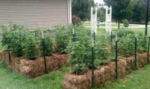 Straw Bale Garden Outside