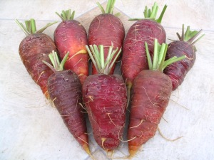 Carrot Oxheart x Purple Haze