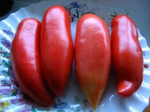 Tomato Long Tom