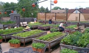 A Roof Top Garden