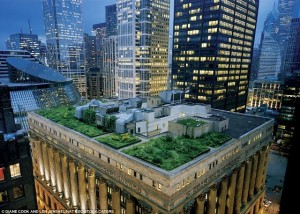 "A Serious ""Roof Top"" Garden!"