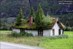 An Abandoned Roof Top Garden!
