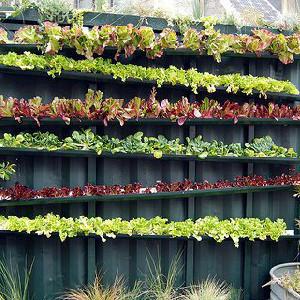 A Straight Garden Wall