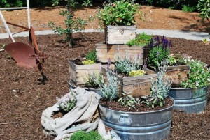 Grandma's Container Garden...