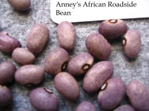Anney's African Roadside Bean