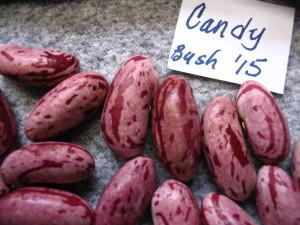 Candy bean