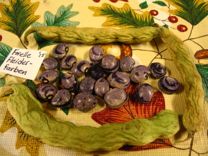 Forelle Fliederfarber Bean